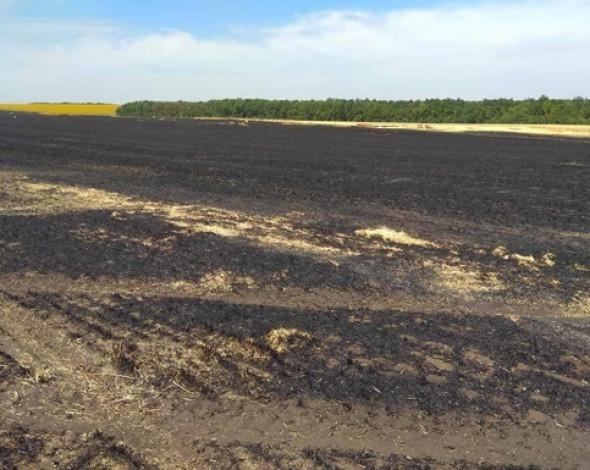 На Черкассчине нанесли ущерб экологии на 24 млн грн