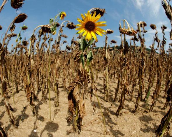 Пустелі, торнадо і нові віруси: екологи розказали, якою буде Україна до 2100 року