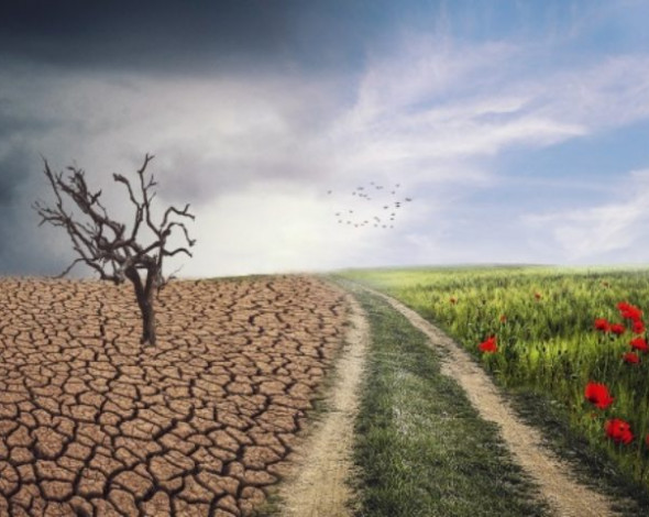 Решение проблем экологии такое же насущное, как и преодоление пандемии, - ООН