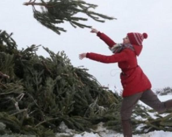 В Украине существует проблема с утилизацией новогодних елок