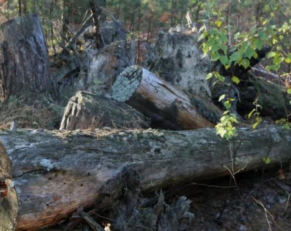 С начала года растительному миру Украины нанесли ущерб более чем 200 000 000 гривен