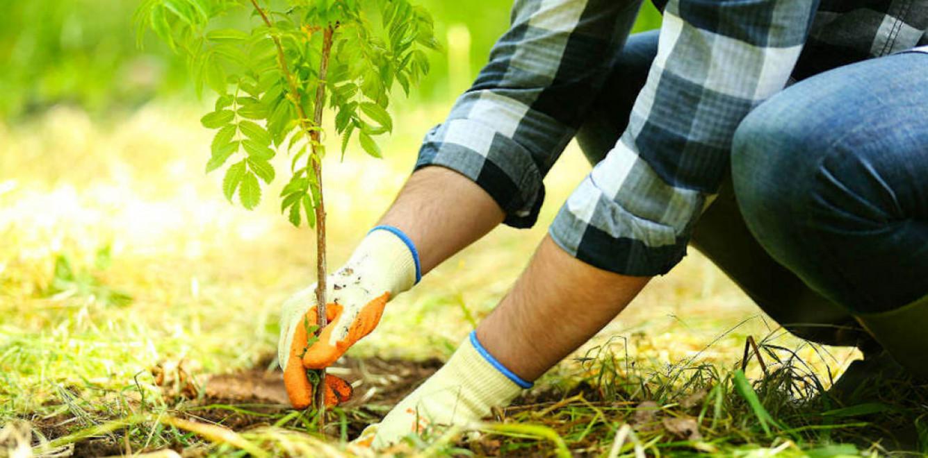 Украина установила мировой рекорд по количеству высаженных деревьев за один день — МИД