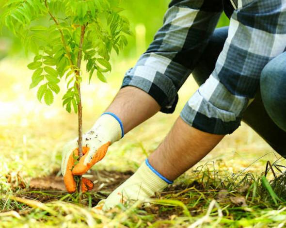 Україна встановила світовий рекорд за кількістю висаджених дерев за один день - МЗС